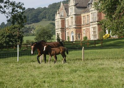 horses-in-field-outside-knowle-manor